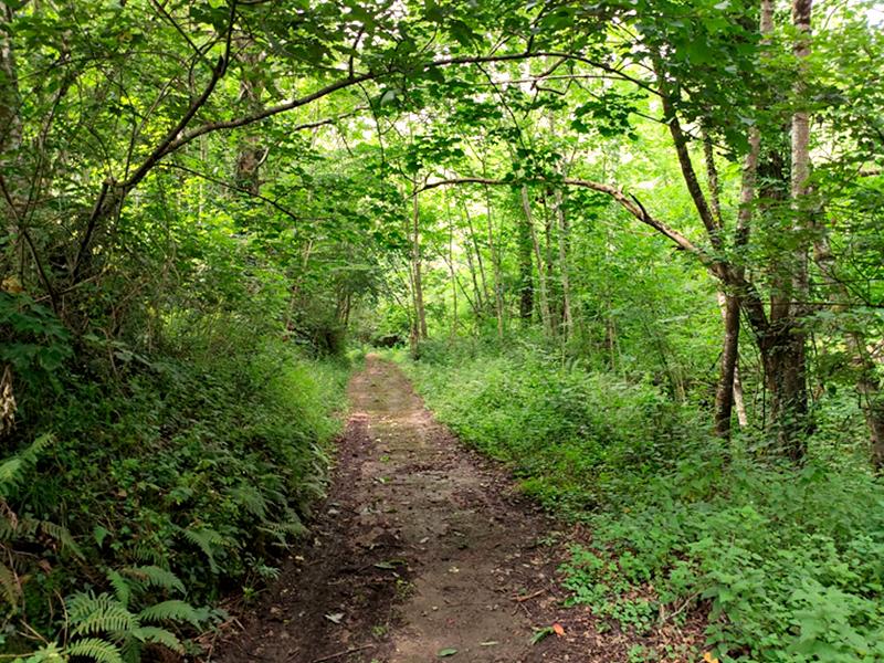 Naturaleza para pasea en el entorno